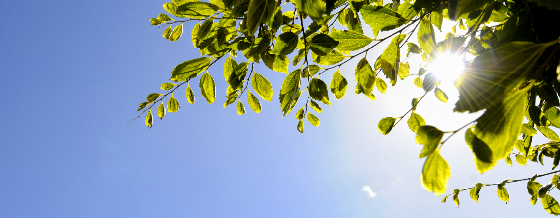 Here Comes the Sun: Implement Heat Stress Programs by May 1