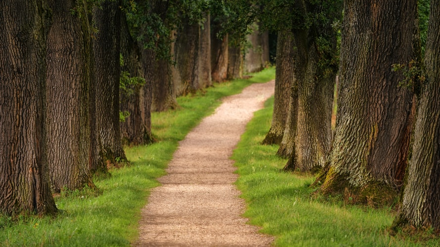 Executive Director's Corner: Pathway to Change